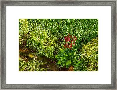 Impressions Of Gardens - A Miniature Spring Creek With A Red Primrose  Framed Print by Georgia Mizuleva
