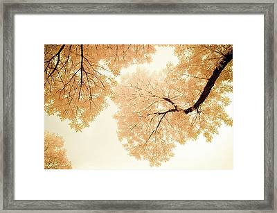 Impressions Of October Framed Print by John De Bord