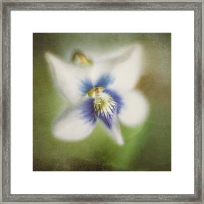 Impressions Of Spring Framed Print by Scott Norris
