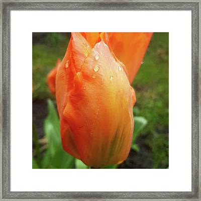 In A Brief Pause Of The Rain A Took A Framed Print by Dante Harker