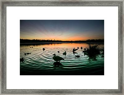 In A Flap Framed Print