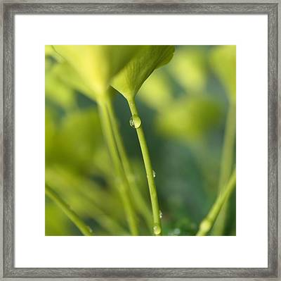 Framed Print featuring the photograph In A Forest Of Spurge  by Connie Handscomb
