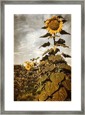 In A Garden Of Tall Friends Framed Print by Becky Titus