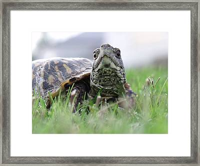 In A Hurry Framed Print by Jeremy Martinson
