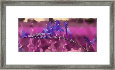 In A Pink World Framed Print by Milena Ilieva