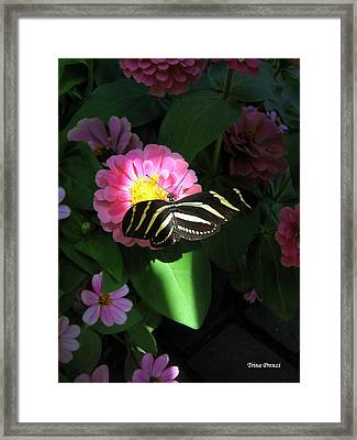 In A Ray Of Sunlight Framed Print by Trina Prenzi