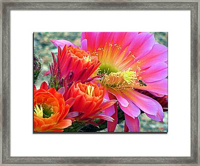 In A Sea Of Red And Pink Framed Print
