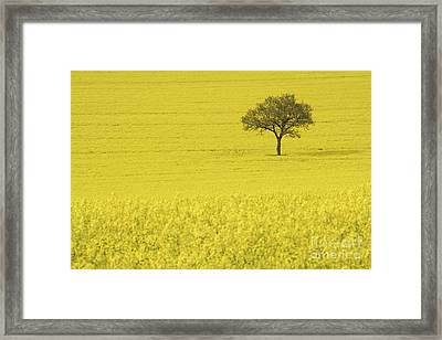 In A Sea Of Yellow Framed Print by Richard Thomas