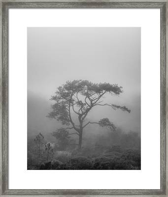 In A Soft Fog Framed Print by Joseph Smith