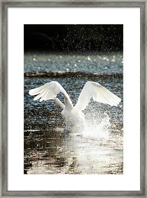 In A Splash Framed Print