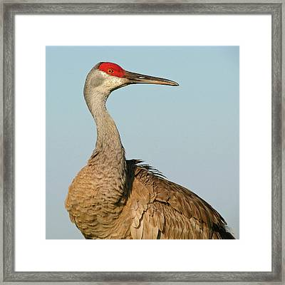 Framed Print featuring the photograph In A Whirl by Peg Urban