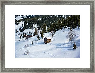 In A Winter Woods Framed Print