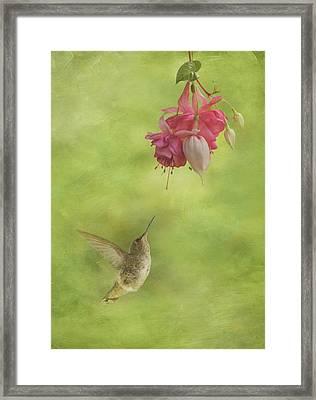 In Awe Of The Fuchsia Framed Print