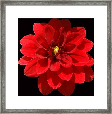 In Bloom Framed Print by Kat Dee