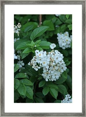In Bloom Framed Print by ShadowWalker RavenEyes Dibler