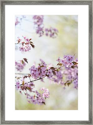 Framed Print featuring the photograph In Bloom. Spring Watercolors by Jenny Rainbow
