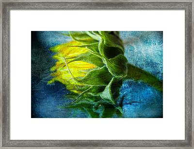 Framed Print featuring the photograph In Blue by John Rivera