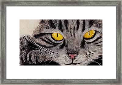 In Cat's Eyes Framed Print