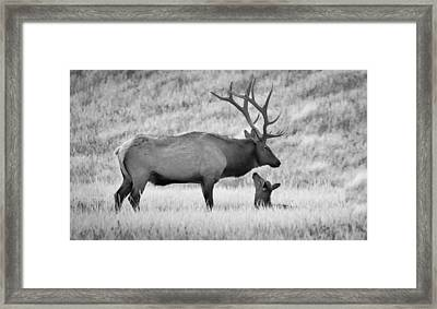 Framed Print featuring the photograph In Charge by Kelly Marquardt