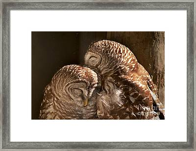 In Cohoots Framed Print by John Hartung