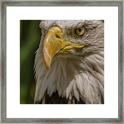 In Command Framed Print