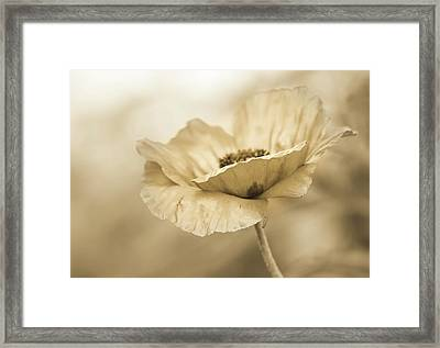 In Due Diligence  Framed Print