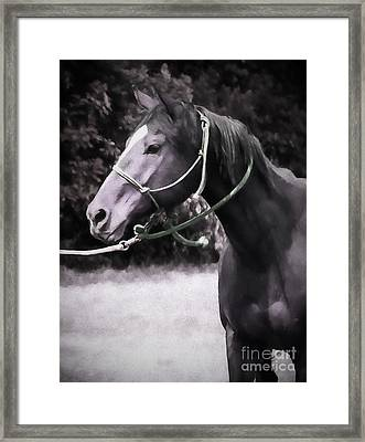 In  Express Framed Print by Jacque The Muse Photography