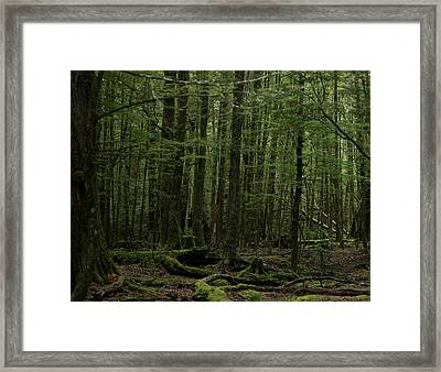In Fangorn Forest Framed Print by Odille Esmonde-Morgan