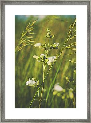 Framed Print featuring the photograph In Fields Of Gold by Christi Kraft