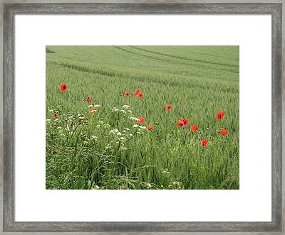 in Flanders Fields the  poppies blow Framed Print