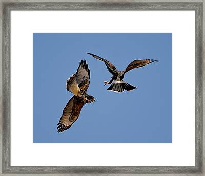 Framed Print featuring the photograph In Flight Challenge H43 by Mark Myhaver