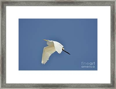 In Flight Framed Print by Clayton Bruster
