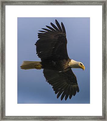 Framed Print featuring the photograph In Flight by Gary Lengyel