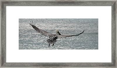 In Flight Framed Print by Ginger Howland