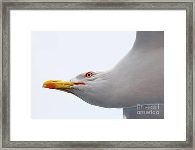In Flight Framed Print by Jivko Nakev