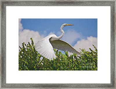 In Flight Framed Print by Judy Kay