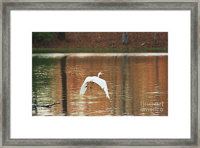 Framed Print featuring the photograph In Flight by Kim Henderson