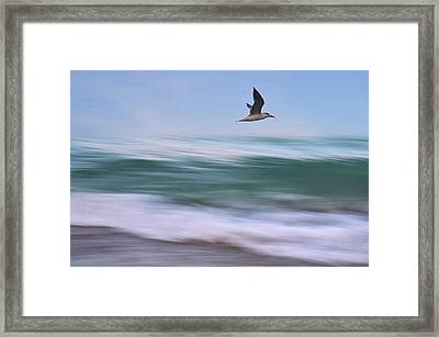 In Flight Framed Print by Laura Fasulo