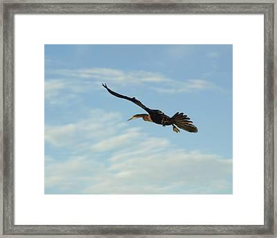 In Flight Framed Print by Marty Koch