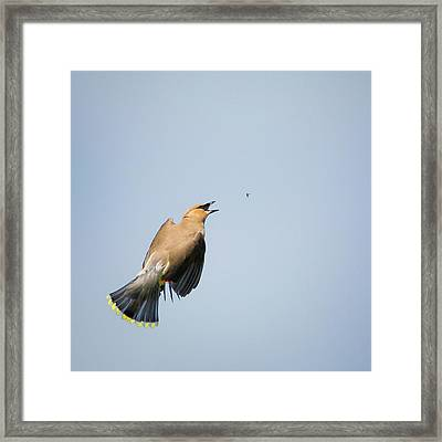 In Flight Meal Square Framed Print by Bill Wakeley