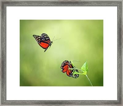 In Flight Framed Print by Nikolyn McDonald