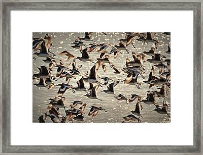 In Flight Framed Print by Paul Causie