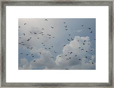 Framed Print featuring the photograph In Flight by Rob Hans