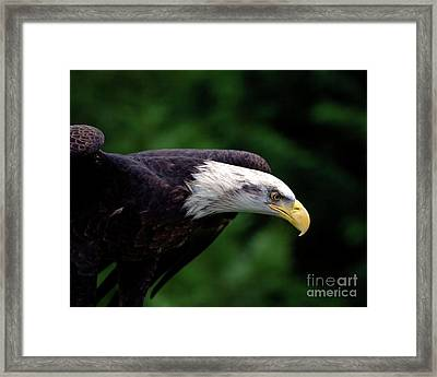 In For The Kill Framed Print by Stephen Melia