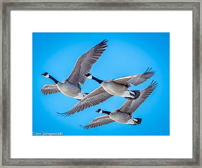 In Formation Framed Print
