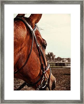 In French Chevel Framed Print by JAMART Photography