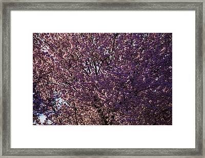 In Full Bloom Framed Print by Garry Gay