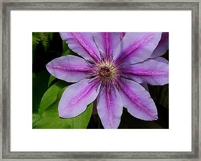 In Full Bloom Framed Print by Lois Lepisto