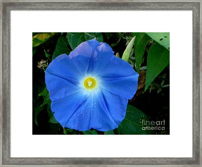 In Full Bloom Framed Print by PJ  Cloud