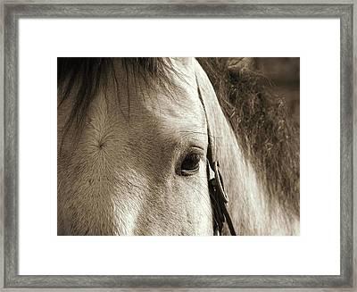 In German Pferd Framed Print by JAMART Photography